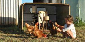 Kleines Mädchen spielt auf einem Bauernhof mit Hühnern